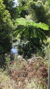 93A McLean Road, Yungaburra  QLD  4884